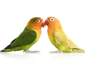 Birds & Exotic Pets